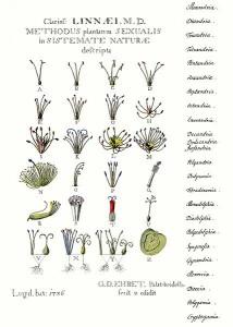 429px-Ehret-Methodus_Plantarum_Sexualis